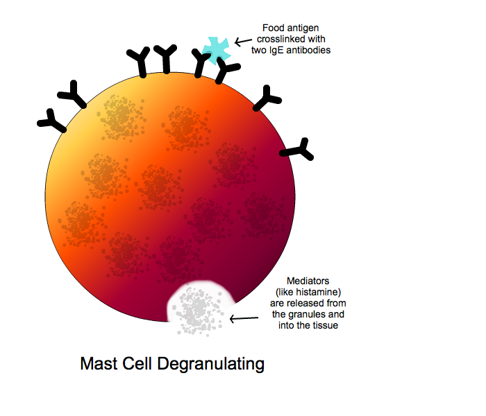 mast_cells_degranulating